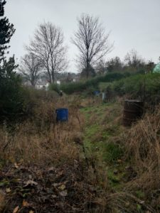 Overgrown allotment 2